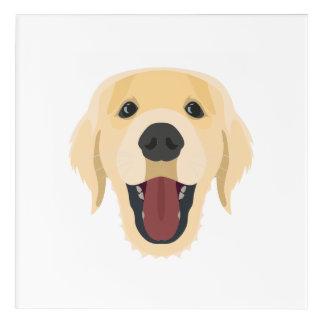 Illustration dogs face Golden Retriver Acrylic Print