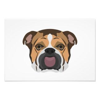 Illustration English Bulldog Photo Print