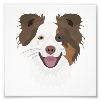 Illustration happy dogs face Border Collie Photo Print