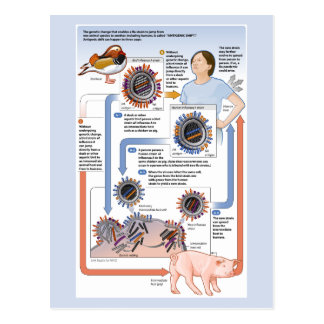 Illustration of antigenic shift (influenza) postcard