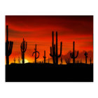 Illustration of cactus tree when the sunset postcard