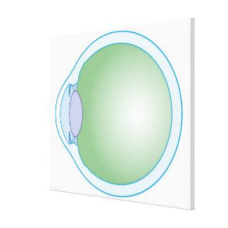 Illustration of Human Eye Canvas Prints