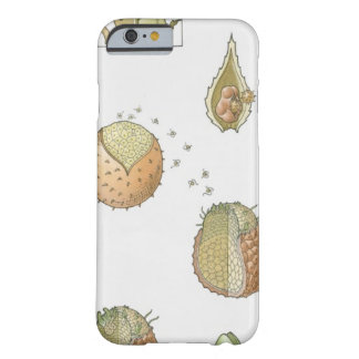 Illustration of the life cycle of a Selaginella Barely There iPhone 6 Case