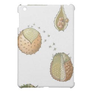 Illustration of the life cycle of a Selaginella iPad Mini Covers