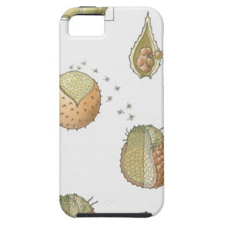 Illustration of the life cycle of a Selaginella iPhone 5 Cases
