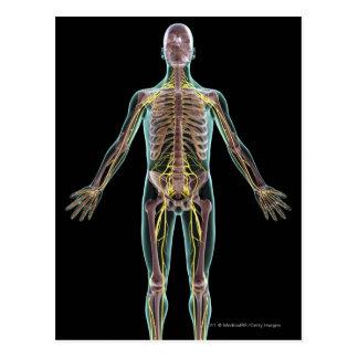 Illustration of the nervous system postcard