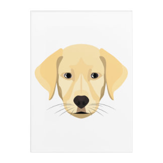 Illustration Puppy Golden Retriver Acrylic Wall Art