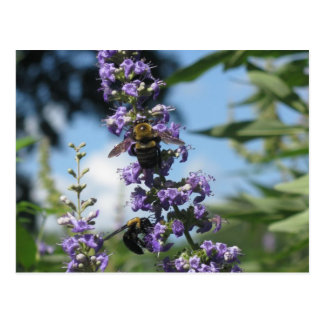 I'm A Busy Bee products Postcard