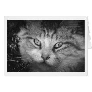 I'm Missing You Greeting Card - B&W Kitty