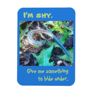 """I'm Shy"" Five-Lined Skink (Lizard) 3x4 Magnet"