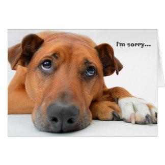 I'm Sorry Dog Card