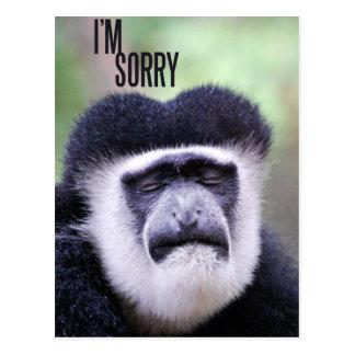 I'm sorry Monkey Postcard