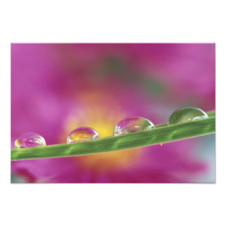 Image of asters formed in water droplets art photo