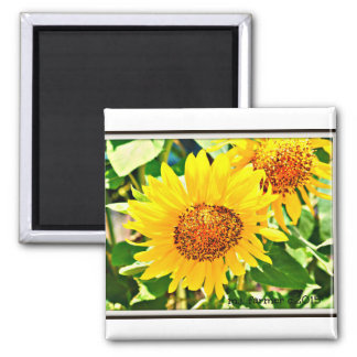 ImagesByMJ Sunflower Collection Coasters Magnet