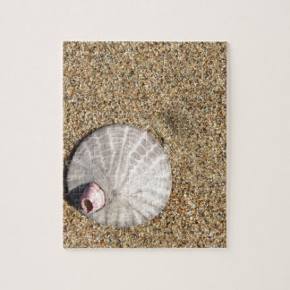 IMG_0578.JPG  Sandollar seashell on beach Jigsaw Puzzle