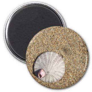 IMG_0578.JPG  Sandollar seashell on beach Magnet
