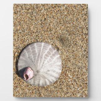 IMG_0578.JPG  Sandollar seashell on beach Plaque