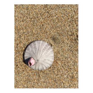 IMG_0578.JPG  Sandollar seashell on beach Postcard