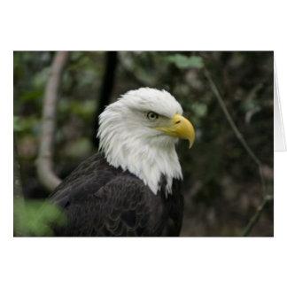 IMG_0673-eagle_5x7 Card