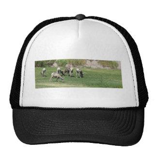 IMG_1180 (2)Big Horn Sheep Trucker Hat