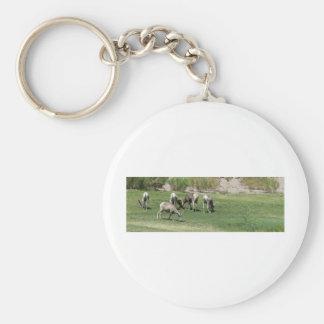 IMG_1180 2 Big Horn Sheep Key Chains