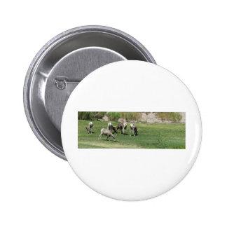 IMG_1180 2 Big Horn Sheep Pins