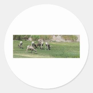 IMG_1180 (2)Big Horn Sheep Round Sticker