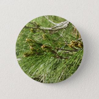 Immature male or pollen cones of pine tree 6 cm round badge