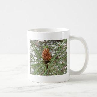 Immature male or pollen cones of pine tree coffee mug