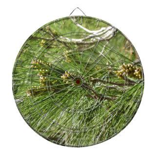 Immature male or pollen cones of pine tree dartboard