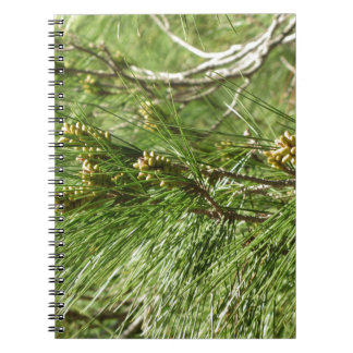 Immature male or pollen cones of pine tree notebook