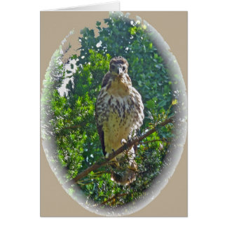 Immature Red Tailed Hawk Coordinating Items Card