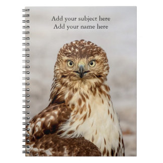 Immature Red-Tailed Hawk on the ground Notebooks
