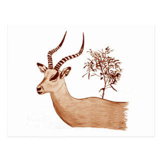 Impala Antelope Animal Wildlife Drawing Sketch Postcard