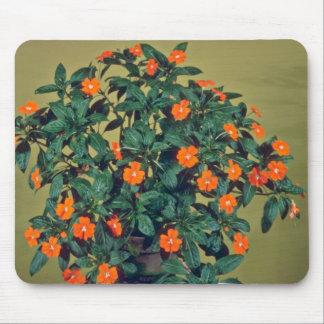 Impatiens, Orange glow Pink flowers Mouse Pad
