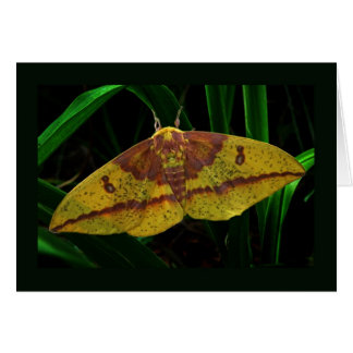 Imperial Silk Moth Note Card