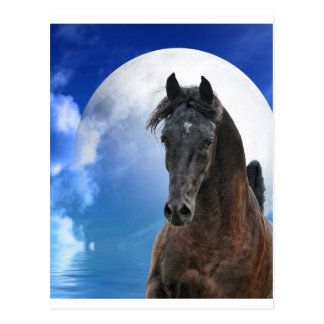 Impressive Stallion Postcard