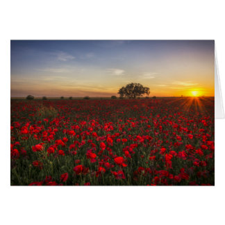 In A Field Of Poppies Greeting Card
