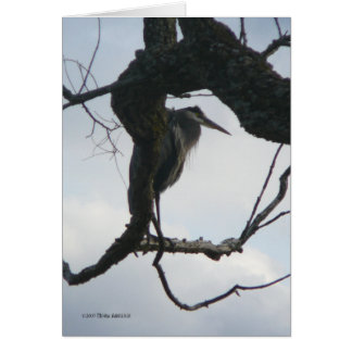 In a Tree Card