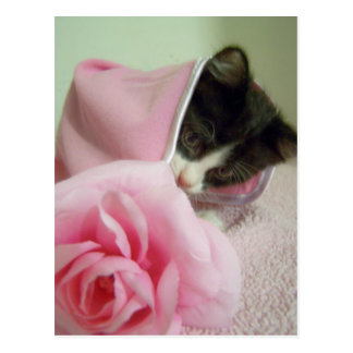 in doll blanket Kitten Postcard