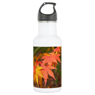 In Fall Colors Multiple 532 Ml Water Bottle