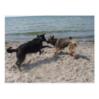 In Love German Shepherds Postcard