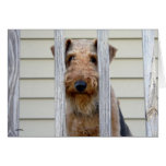 """In the Doghouse"" Greeting Card"
