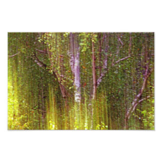 In The Forest Of Motion And Light. Photographic Print
