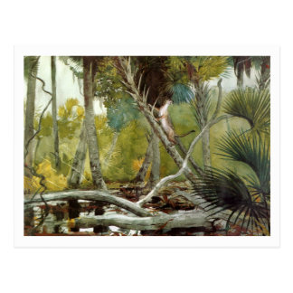 In the Jungle, Florida by Winslow Homer Postcard