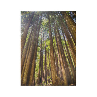 In the Redwoods Wood Poster