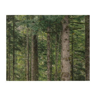 In the Woods Wood Wall Decor
