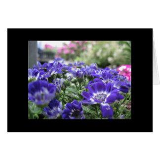 In violet... card