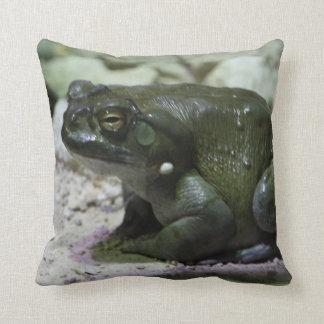 Incilius alvarius cushion