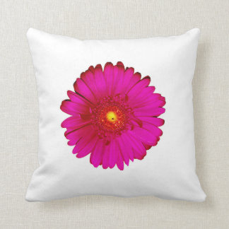 Incredible Hot Pink Gerbera Daisy on White Cushion